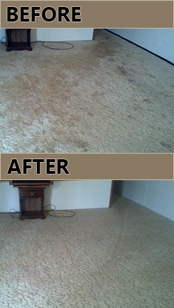 Granbury carpet cleaning pet urine removal.